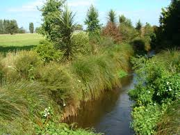 How to select the best plants for riparian margins